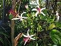 Hibiscus 5 (6066098971).jpg