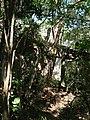 Hidden Ruin House - panoramio.jpg