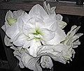 Hippeastrum sp. (amaryllis) 2 (32330874630).jpg