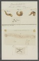 Hirudo astaci - - Print - Iconographia Zoologica - Special Collections University of Amsterdam - UBAINV0274 103 09 0002.tif