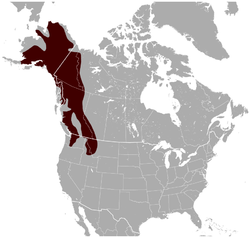 Hoary Marmot Marmota caligata distribution map.png