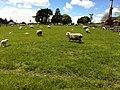 Hobbiton, The Shires, Middle Earth, Matamata, North Island, New Zealand - panoramio (5).jpg