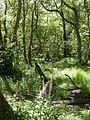Holmsley, woodland - geograph.org.uk - 1357429.jpg