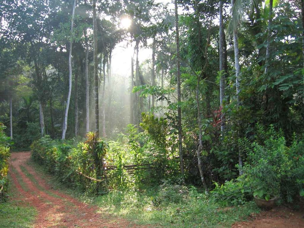 File:Home Garden in Matugma 1.jpg - Wikimedia Commons