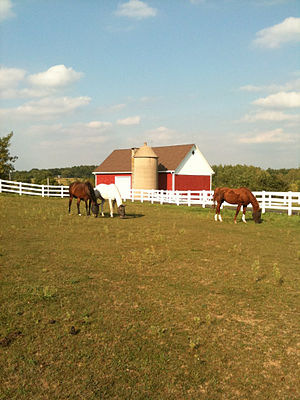 Horses Grazing outside of Hartford, WIsconsin