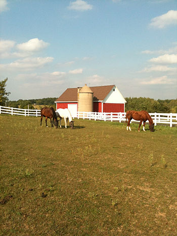 English: Horses Grazing outside of Hartford, W...