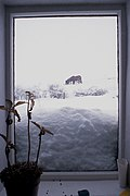 Horses in the Snow.jpg