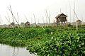 IMG 1230 Burma Inlé Lake Floatting Garden (4641861643).jpg