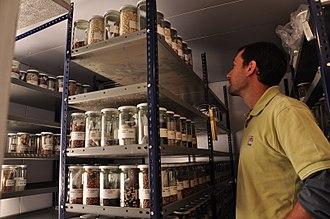 Germplasm - Germplasm bank of the Instituto Nacional de Tecnología Agropecuaria.