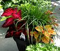 I like this planter idea for near our front door (5695398340).jpg