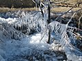 Ice crystal on the cherry tree - panoramio.jpg