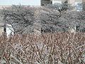 Icy trees (5411094785).jpg