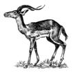 Impala (PSF).png