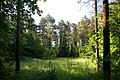 In Bracknamuckley Wood - geograph.org.uk - 475369.jpg