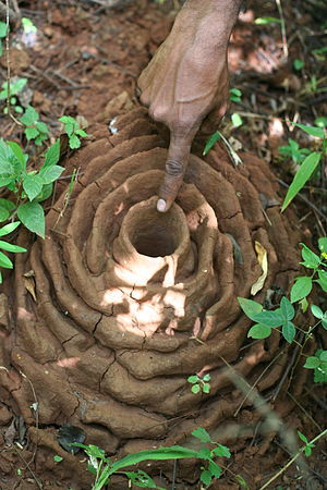 Indian Harvester Ant Nest.JPG