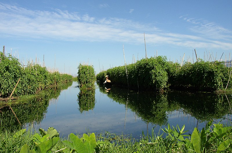 File:Inle Lake,Floating Garden.JPG