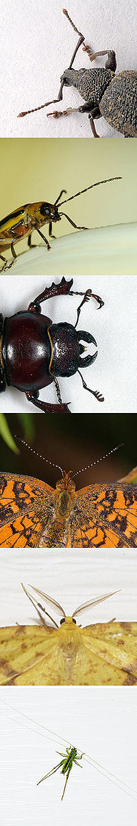Insect antennae.jpg