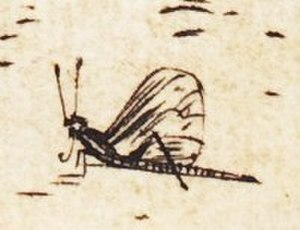 """The Holy Family with the Dragonfly - Insect in Dürer's The Holy Family with the Mayfly. Detail of """"mayfly"""" in lower right corner of engraving"""