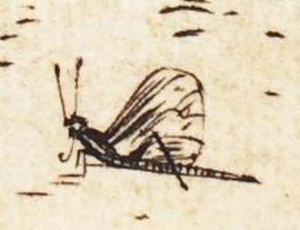 "The Holy Family with the Dragonfly - Insect in Dürer's The Holy Family with the Mayfly. Detail of ""mayfly"" in lower right corner of engraving"