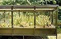 Insectivorous plants in Zurich bot.garden 1989. 05.27.jpg