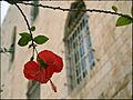 Israel by Dainis Matisons (3324619515).jpg