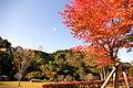 Iwadeyama28Oct07.jpg