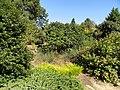 J. C. Raulston Arboretum - DSC06143.JPG