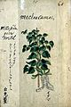 Japanese Herbal, 17th century Wellcome L0030092.jpg