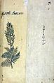 Japanese Herbal, 17th century Wellcome L0030097.jpg