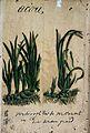 Japanese herbal, 17th century Wellcome L0030036.jpg