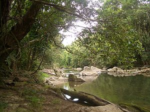 Cassowary Coast Region - On the Liverpool Creek near Japoonvale (between Tully and Innisfail)