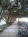 Jardim das Camélias, Porto.jpg