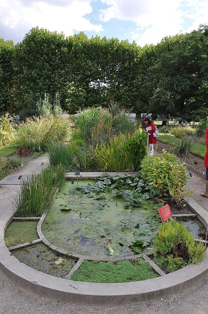 Original file 2 136 3 216 pixels file size mb for Jardin botanique paris