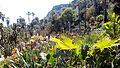 Jardines de Mossèn Costa i Llobera.jpg