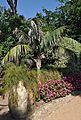 Jardines de cap roig-calella de palafurgell-8-2013 (10).JPG