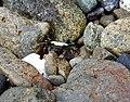 Jedway Bay (28751507591).jpg