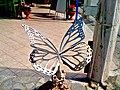 Jos Peperkamp Butterfly Mastichari Kos - panoramio.jpg