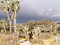 Joshua Tree - Storm over Barker Dam.jpg