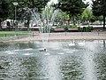 Joutsenet suihkulähteellä, swan fountain, two swans, swan - panoramio.jpg