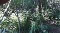 Kříž u rybníka Valchař u Chýnova (Q80455696).jpg