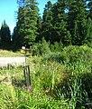 Kamenka Pond IMG 1513 1514-2 images.jpg