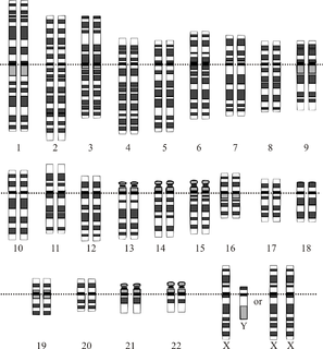 Human genome complete set of nucleic acid sequence for humans