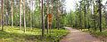 Keljonkangas - path 3.jpg