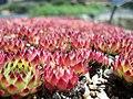Kew Garden Visit (3656928002).jpg