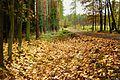 Klonowe liście - panoramio.jpg
