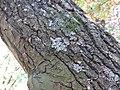 Kora drveta u parku (1).jpg