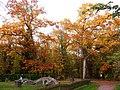 Korina 2011-10-30 Quercus rubra.jpg