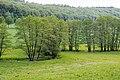 Lügde - 2015-05-24 - LIP-049 Ilsenbach (3).jpg