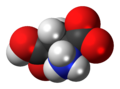 L-Aspartic-acid-zwitterion-3D-spacefill.png