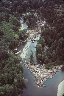 Log jam Accumulation of large wood in a stream or river, preventing movement downstream